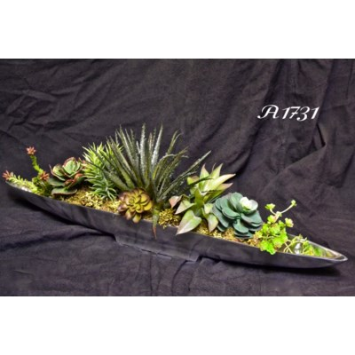SUCCULENTS IN SILVER BOAT