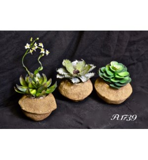 SET OF 3 SUCCULENTS IN GOURDS