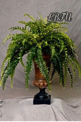 LG. BOSTON FERN IN URN
