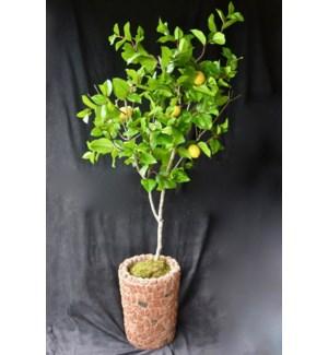 5 FT. LEMON TREE