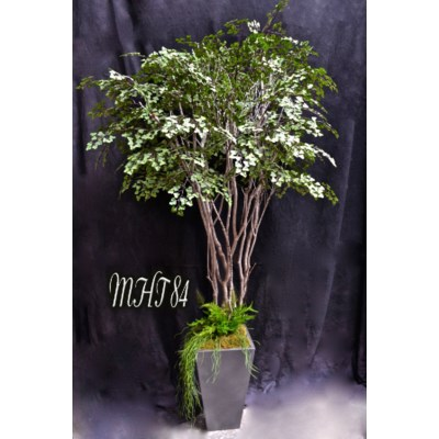 6 FT. MAIDENHAIR TREE WITH SUCCULENTS