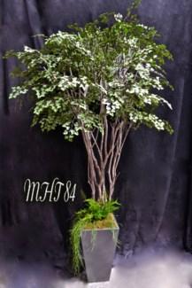 7 FT. MAIDENHAIR TREE
