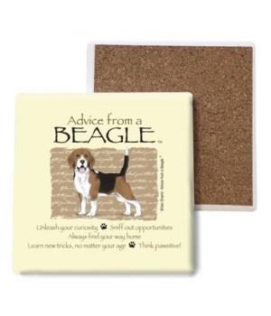 Advice from a Beagle coaster bulk