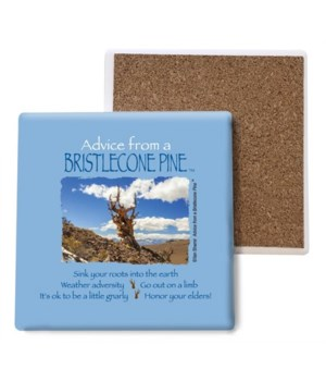 Advice from a Bristlecone Pine coaster b