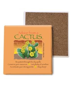 Advice from a Cactus coaster bulk