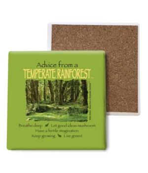 Advice from a Temperate Rainforest Bulk