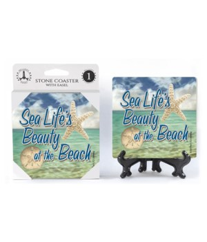 Sea Life's beauty at the beach (sand dol