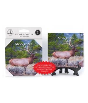 Montana - Elk male standing in field w/o