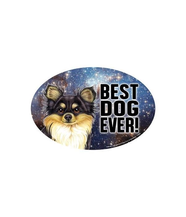 Chihauhua (black & tan) (Best Dog Ever!)