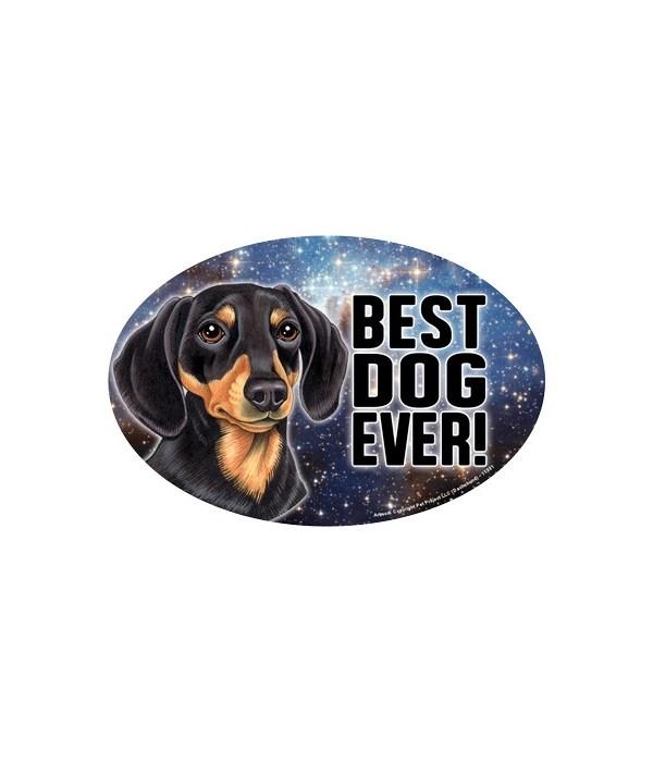 Dachshund (black & tan) (Best Dog Ever!)
