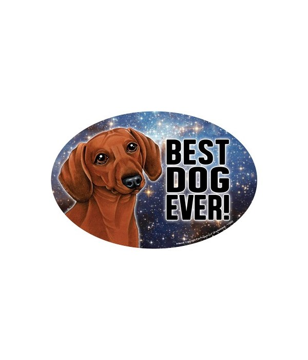 Dachshund (reddish coloring) (Best Dog E