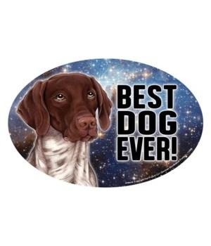 German Shorthaired Pointer (Best Dog Eve