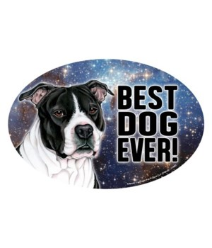 Pitbull (black & white) (Best Dog Ever!)