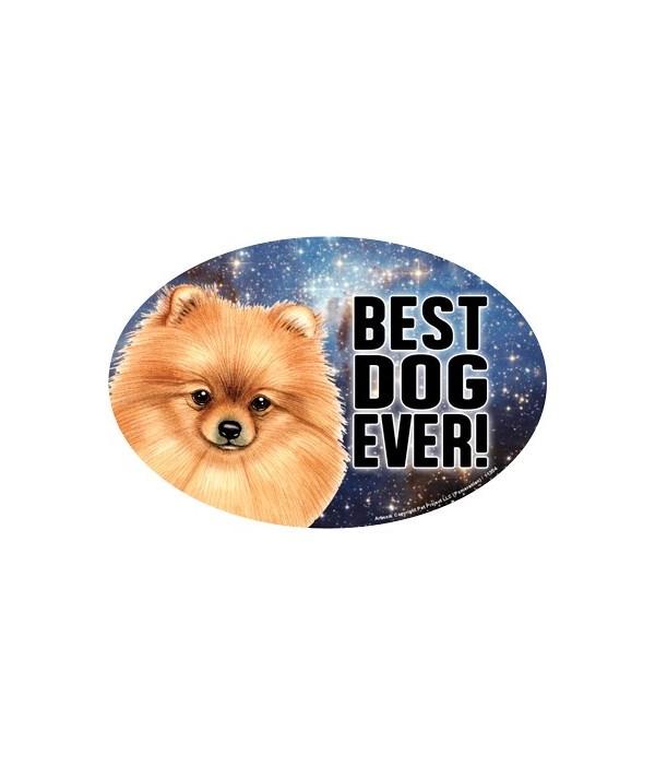 """Pomeranian (Best Dog Ever!) 6"""" Oval Magn"""