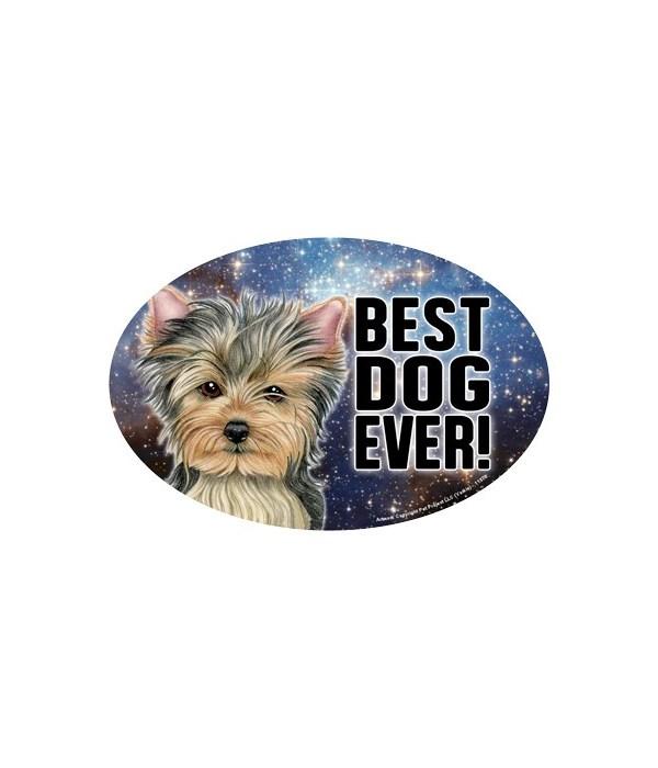 Yorkshire Terrier - Yorkie (Best Dog Eve
