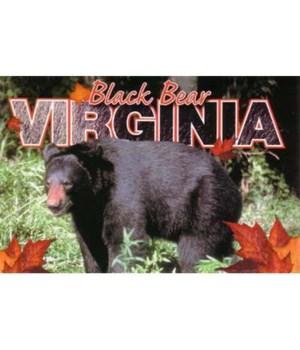 VA Postcard Black Bear