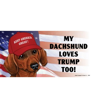 My Dachshund loves Trump too! (red-brown