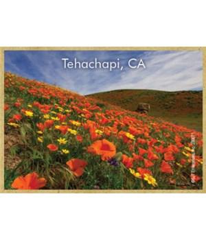 Tehachapi, CA - poppy field