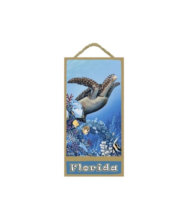 Apollo - Sea turtle swimming upward with