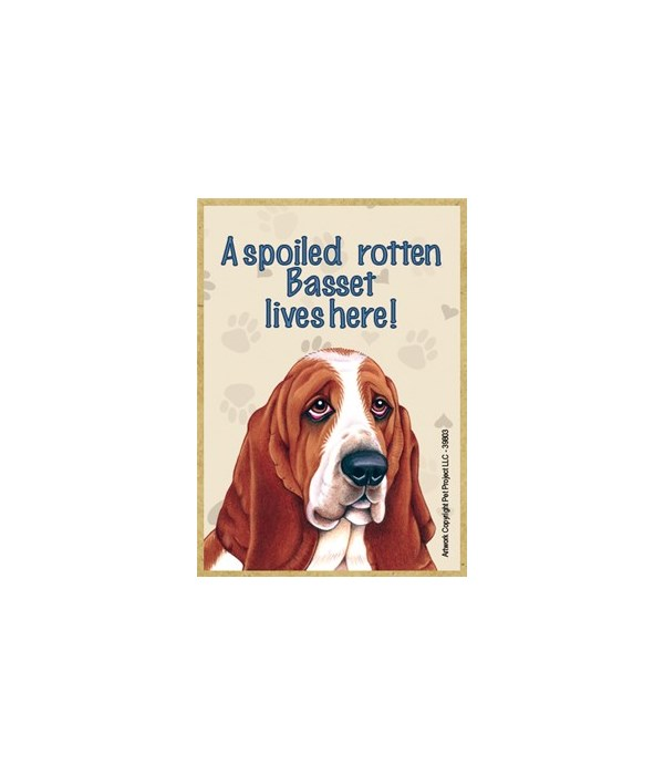A spoiled rotten Basset (Hound) lives he