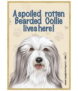 A spoiled rotten Bearded Collie lives he