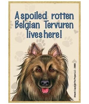 A spoiled rotten Belgian Tervuren lives