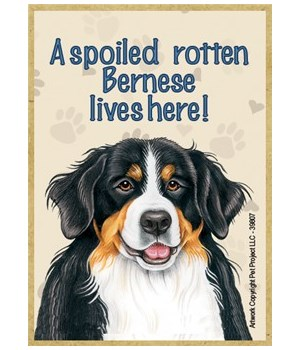 A spoiled rotten Bernese lives here! Mag