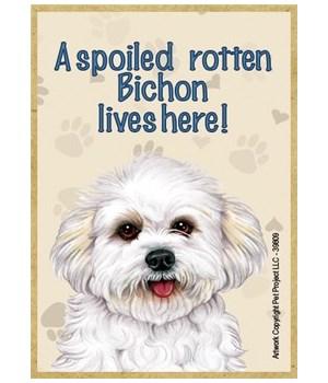 A spoiled rotten Bichon (puppy cut) live