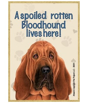 A spoiled rotten Bloodhound lives here!