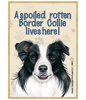 A spoiled rotten Border Collie lives her
