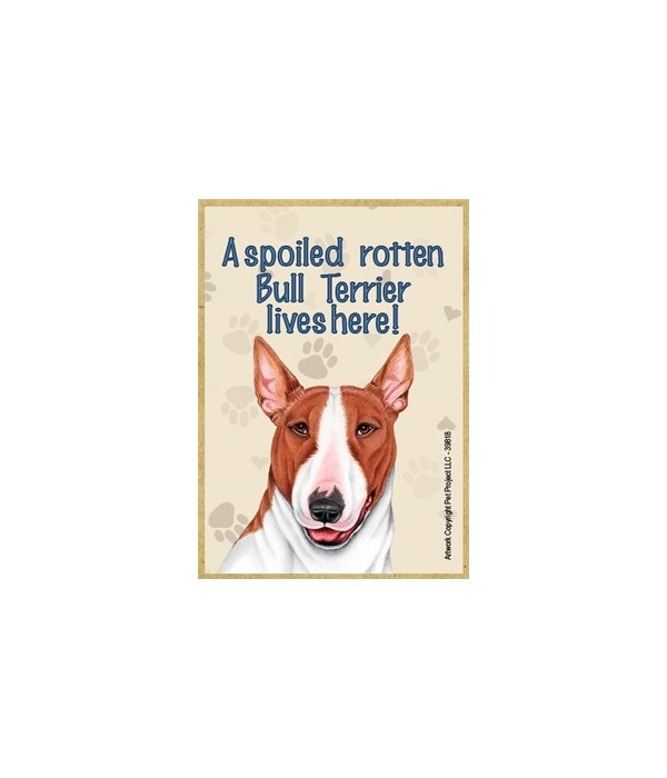 A spoiled rotten Bull Terrier (Brown and