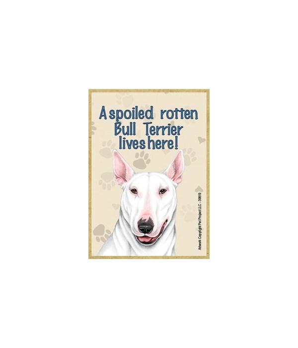 A spoiled rotten Bull Terrier (White) li