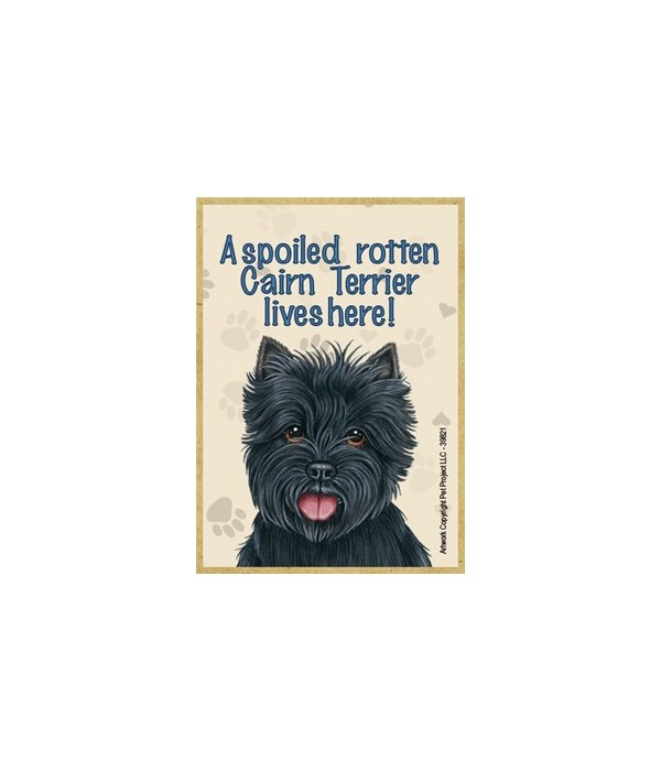 A spoiled rotten Cairn Terrier (black) l