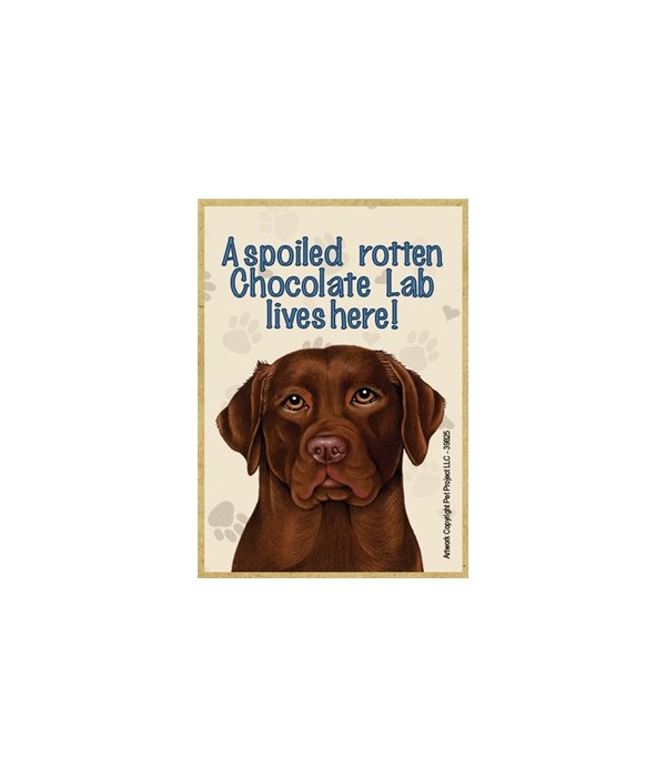 A spoiled rotten Chocolate Lab lives her