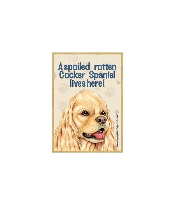 A spoiled rotten Cocker Spaniel (America