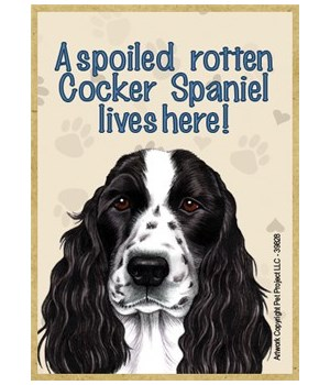 A spoiled rotten Cocker Spaniel (English