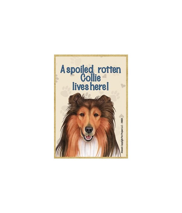 A spoiled rotten Collie lives here! Magn