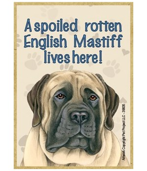 A spoiled rotten English Mastiff lives h