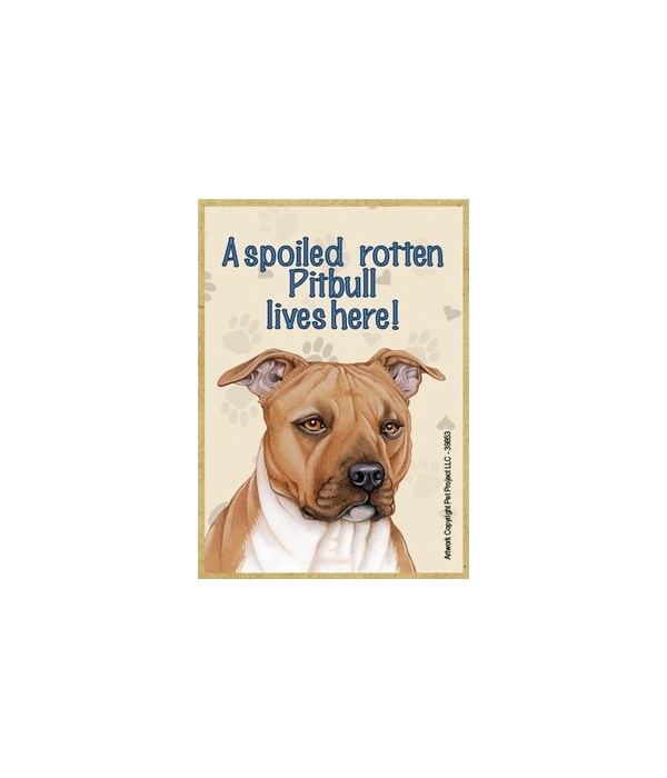 A spoiled rotten Pitbull (Brown color) l