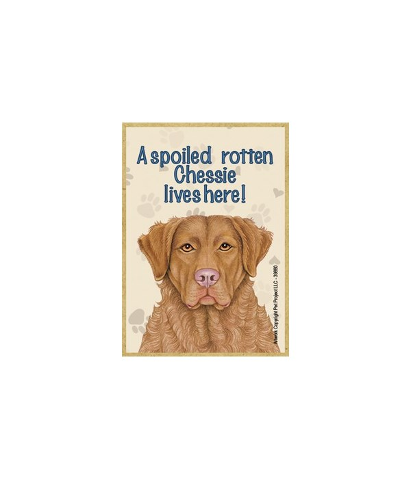 A spoiled rotten Chessie (Chesapeake Bay