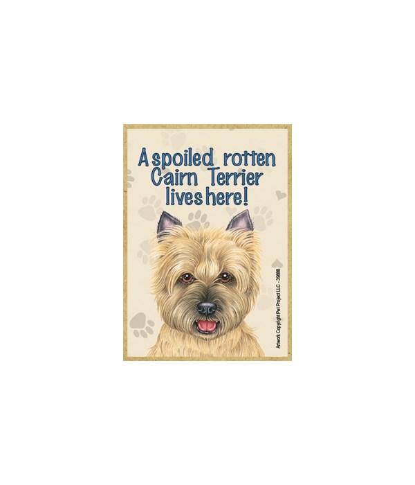 A spoiled rotten Cairn Terrier (tan) liv