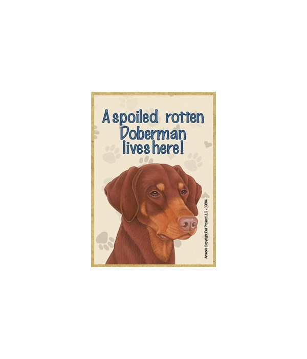 A spoiled rotten Doberman (red-brown, dr