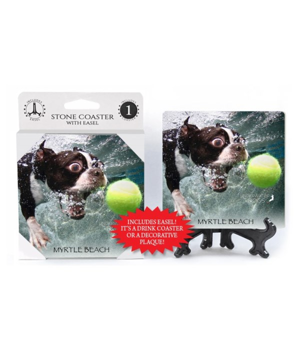 Boston Terrier biting at tennis ball