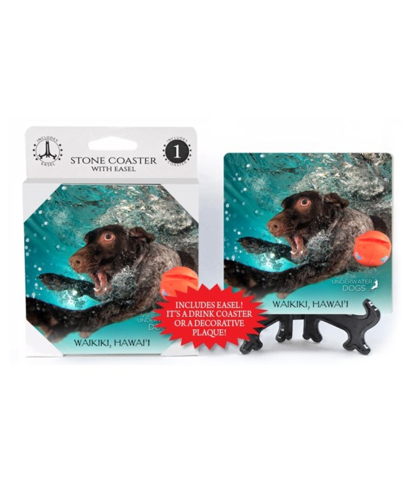 German Shorthaired Pointer swimming by o