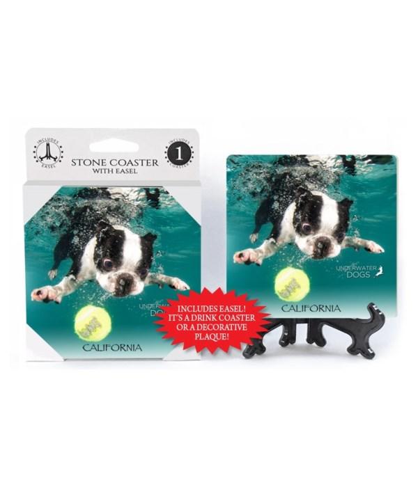 Boston Terrier diving for tennis ball, m