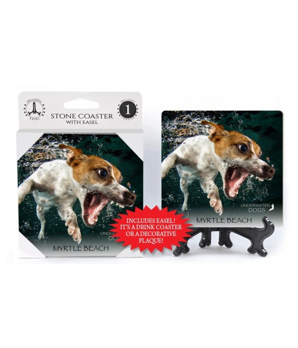 Jack Russell Terrier with mouth wide ope