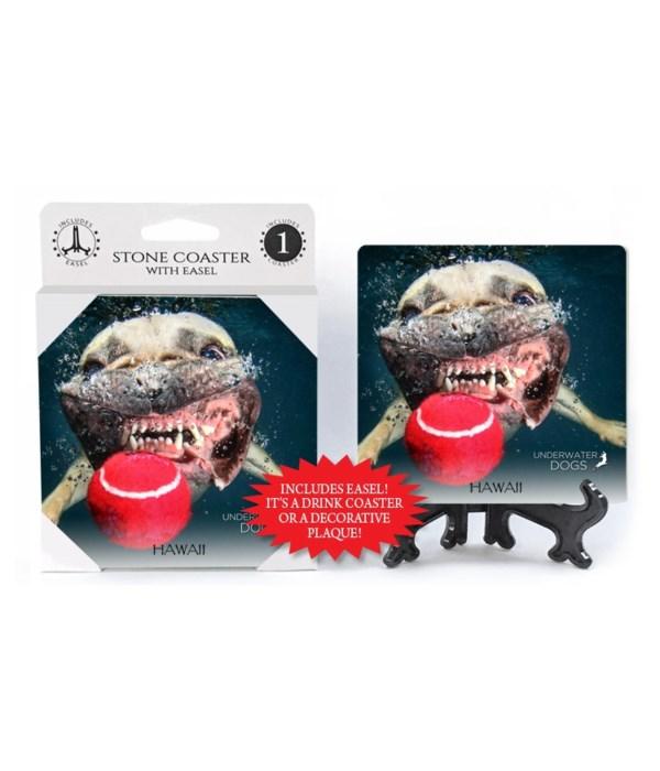 French Bulldog, close up of teeth and jo