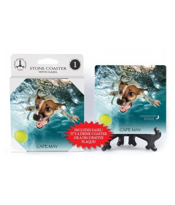 Jack Russell Terrier diving forward towa
