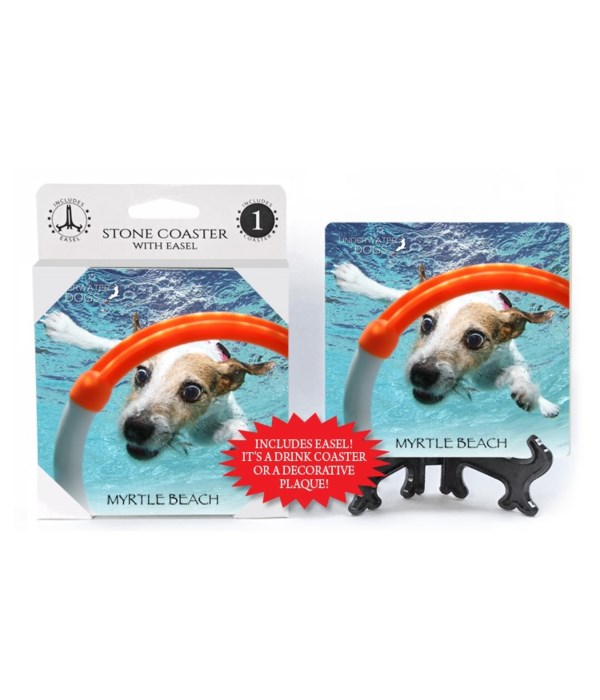 Jack Russell Terrier diving for orange a