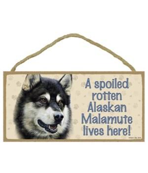 Alaskan Malamute Spoiled 5x10
